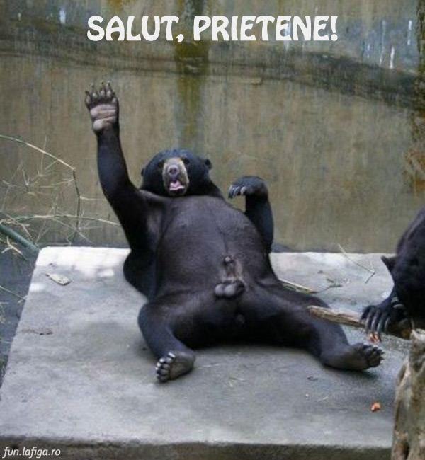 salut-prietene